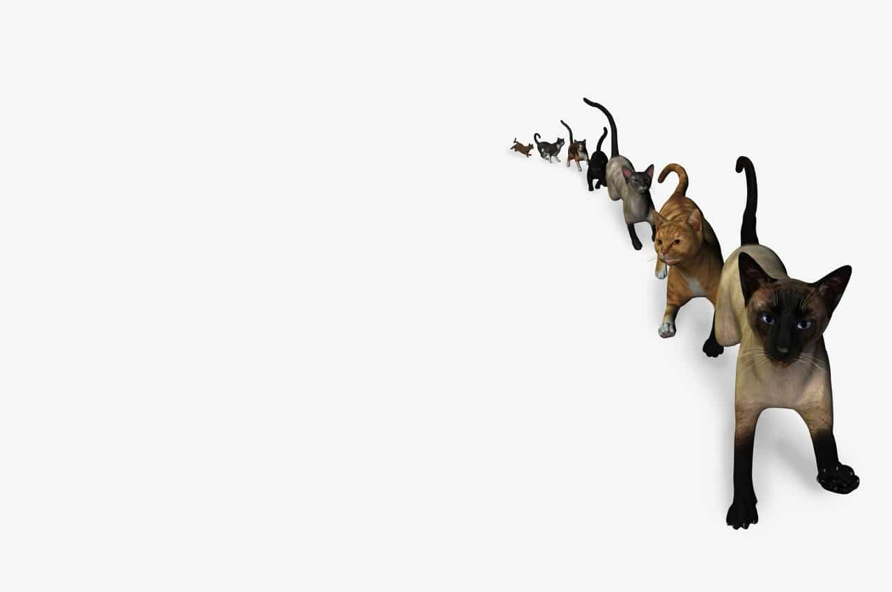 LaskIT Staff background image ninja cats v2 1280x850